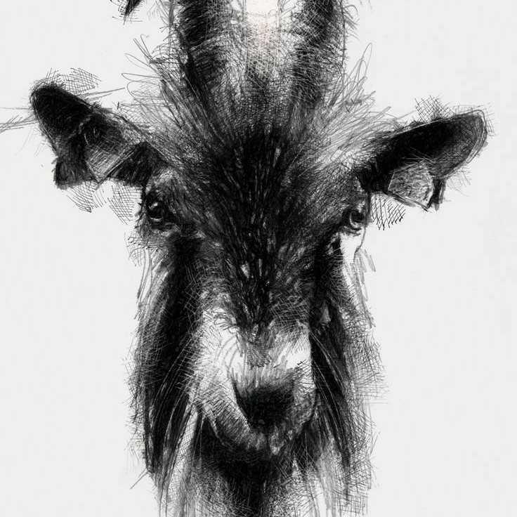 Frantic Goat